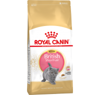 British Shorthair Kitten Royal Canin