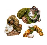 Aquadecore Coral clams