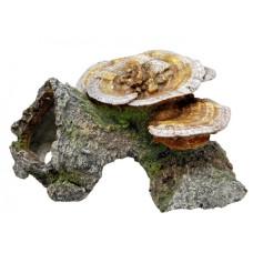Aquadecore Cave mushrooms