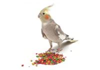 Корм для птиц