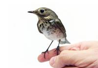 Средства ухода для птиц