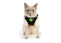 Амуниция и аксессуары <br />для кошек