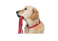 Амуниция, рулетки и аксессуары для собак