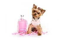 Косметика, средства гигиены и ухода для собак