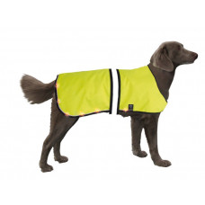 LED safety dog